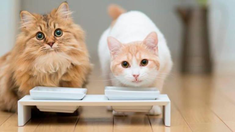 Top 10 de alimentos que podrían matar a tu gato