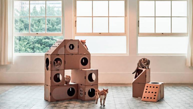 Primer día del gato en casa, ¿Que hacer?